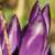 Profilbild von Freie-Baptisten-ER